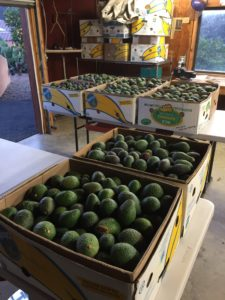 Home-Grown Avocados For Sale
